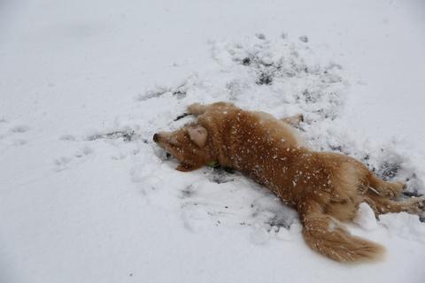 雪が降りました!_b0275998_23461174.jpg