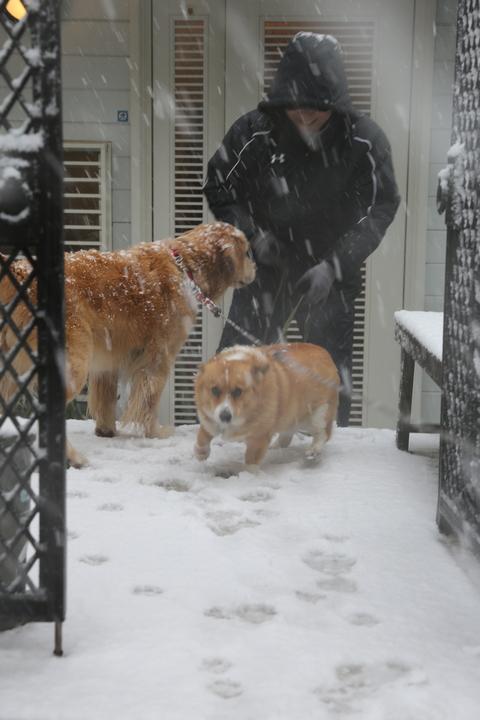 雪が降りました!_b0275998_23475.jpg