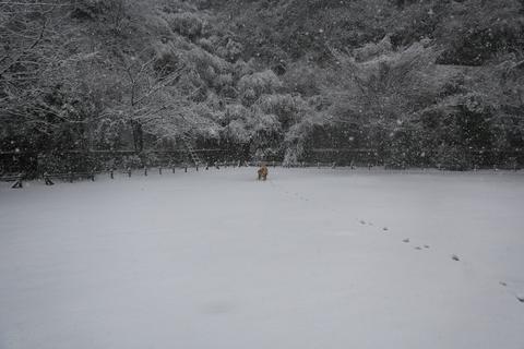 雪が降りました!_b0275998_2349525.jpg