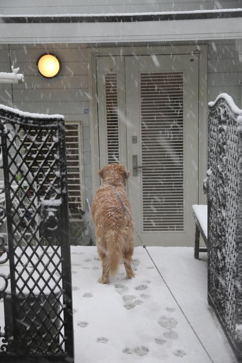 雪が降りました!_b0275998_2351073.jpg