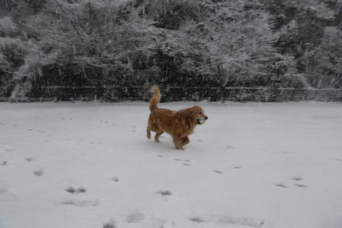 雪が降りました!_b0275998_23514384.jpg