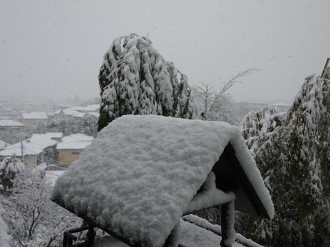 雪の日の玄米小豆粥_c0125702_2138734.jpg