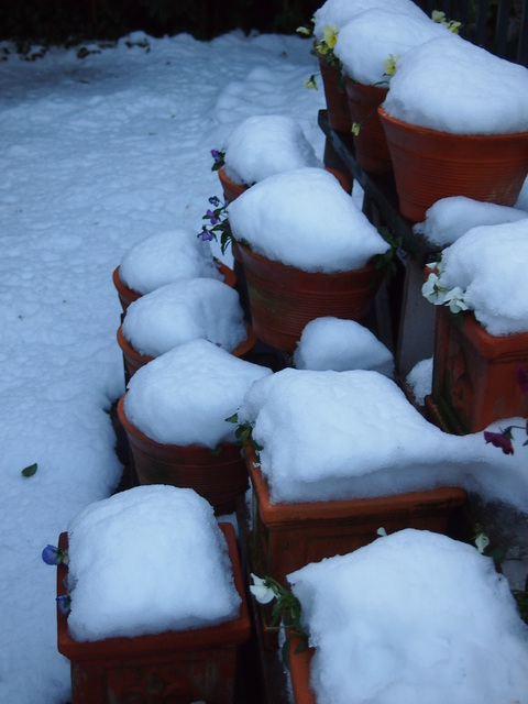 雪の日の玄米小豆粥_c0125702_21482663.jpg