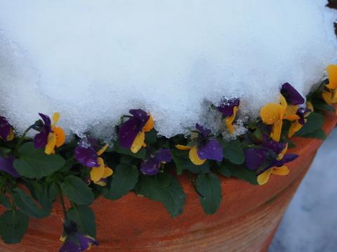 雪の日の玄米小豆粥_c0125702_21485399.jpg