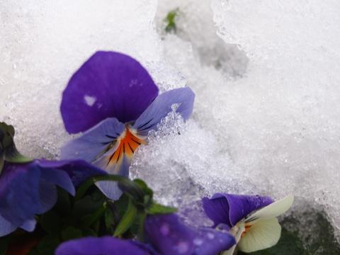 雪の日の玄米小豆粥_c0125702_21491598.jpg