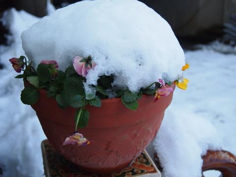 雪の日の玄米小豆粥_c0125702_21554444.jpg