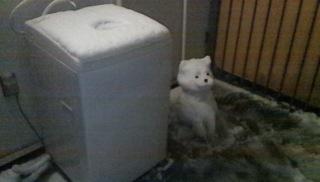 雪犬_c0200314_8473474.jpg