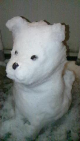 雪犬_c0200314_8512289.jpg