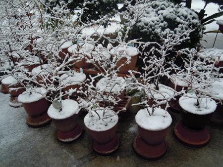 ブルーベリー鉢増しとオーディオルーム造り_e0097534_11304014.jpg