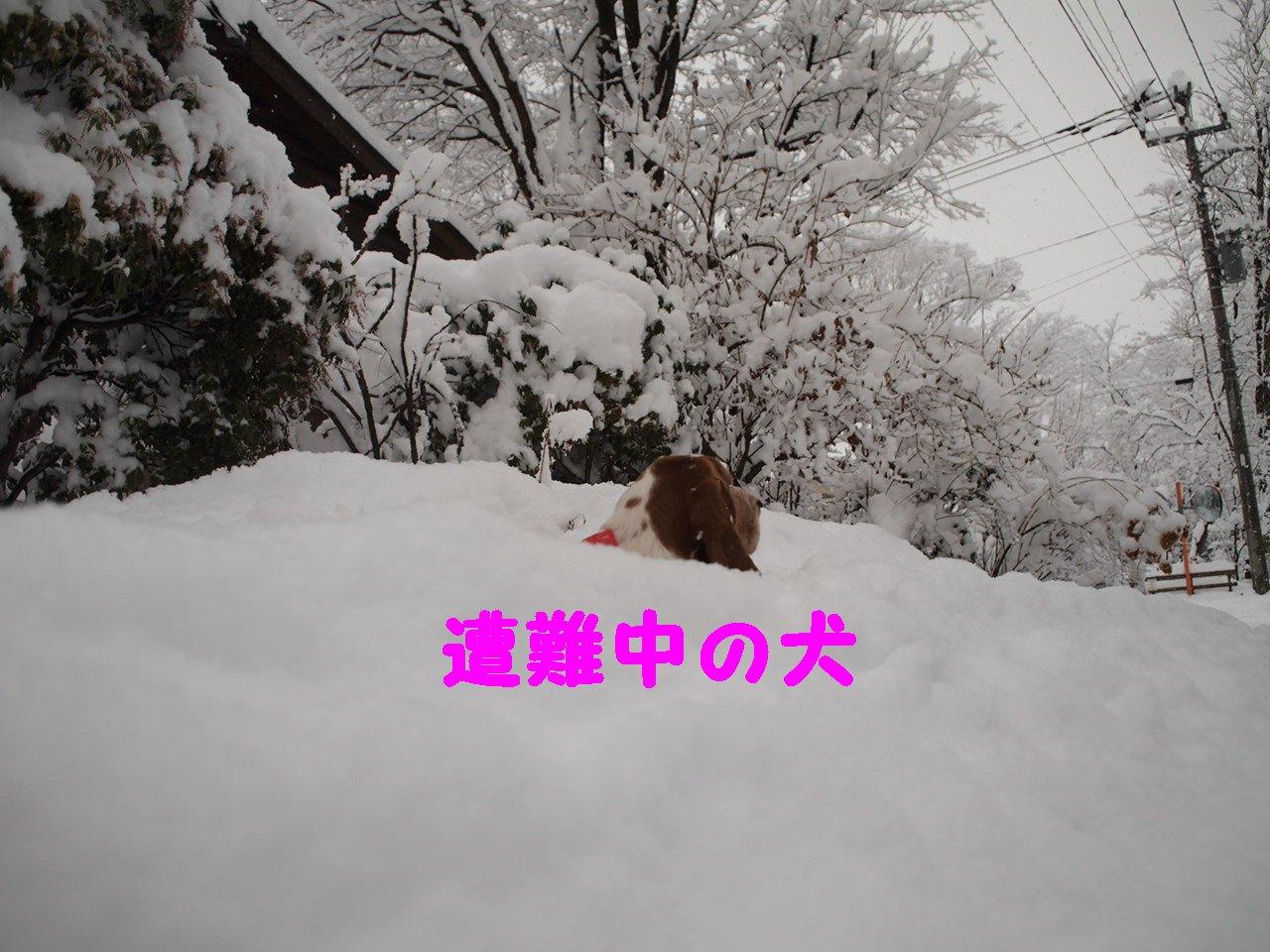 a0299945_925565.jpg