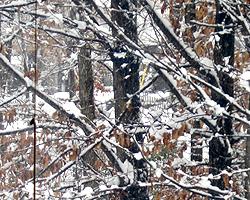 大雪の成人式_d0050155_0582610.jpg