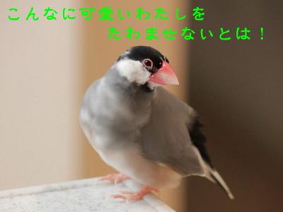b0158061_21201621.jpg