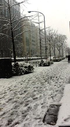 雪_d0118165_1751838.jpg