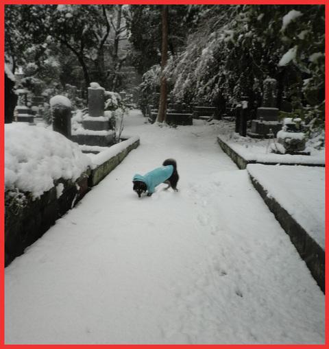 小正月も明日まで、「さあ!今年は、ハジケルわよ!」。_e0236072_124327.jpg