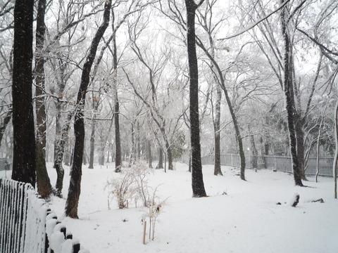 わが家の大雪の被害_e0232277_11582012.jpg