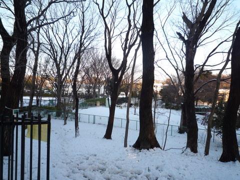 わが家の大雪の被害_e0232277_12018.jpg