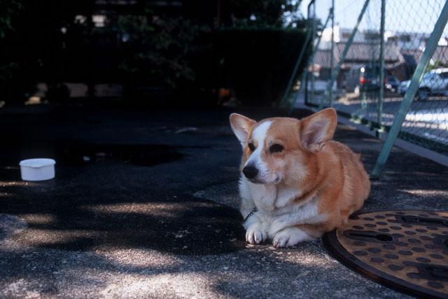 犬_e0126186_2195541.jpg