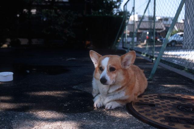 犬_e0126186_219682.jpg
