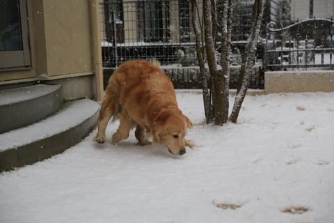 雪が降りました!_b0275998_9255199.jpg