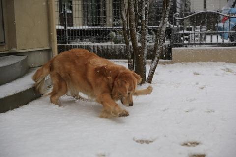 雪が降りました!_b0275998_926213.jpg