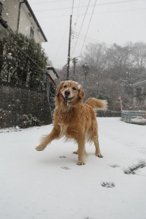 雪が降りました!_b0275998_9333240.jpg