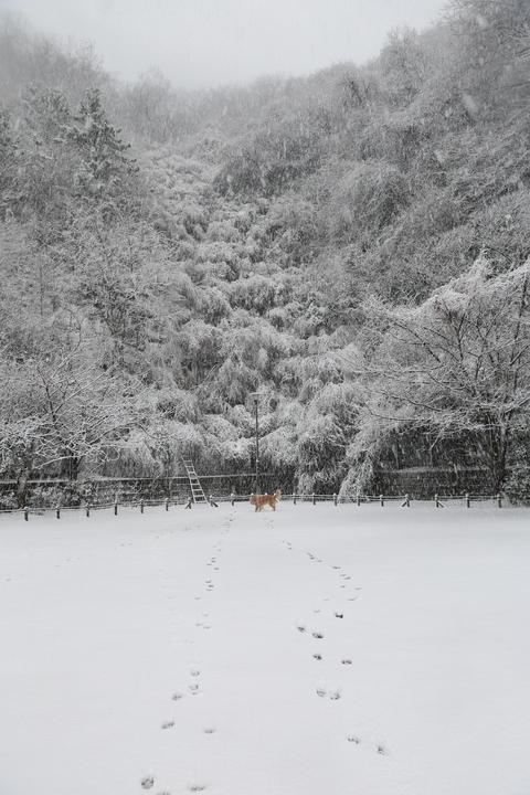 雪が降りました!_b0275998_939039.jpg
