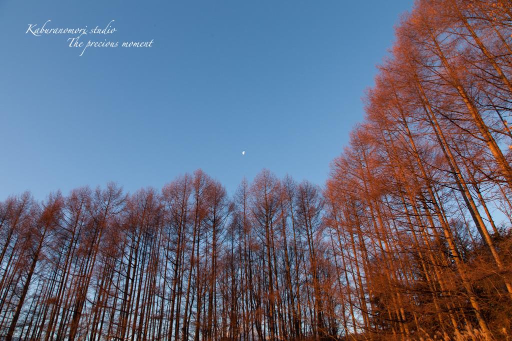 夜明け前の美しさ_c0137403_17175657.jpg