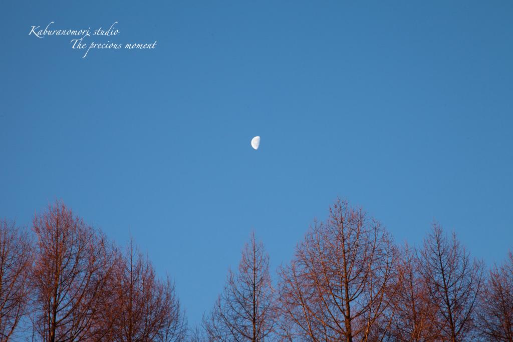 夜明け前の美しさ_c0137403_17185539.jpg