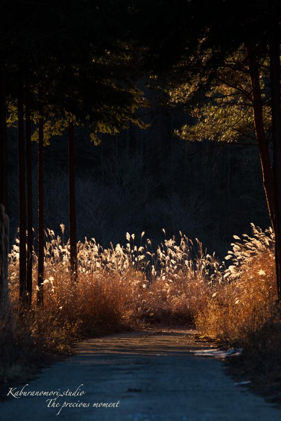 夜明け前の美しさ_c0137403_17192729.jpg