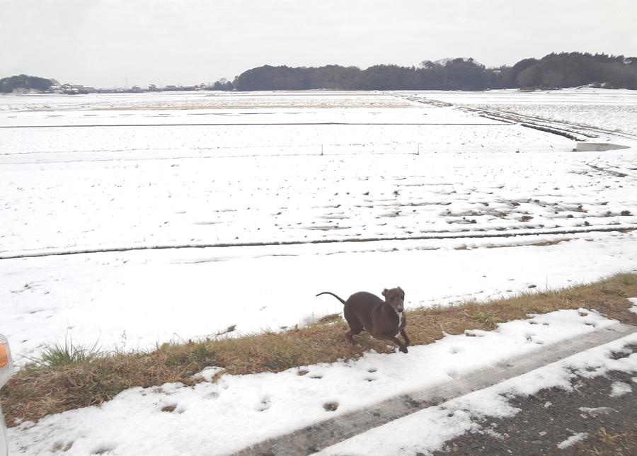 降雪後の散歩_d0151813_14595965.jpg