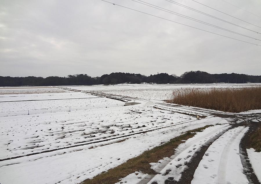 降雪後の散歩_d0151813_1502542.jpg