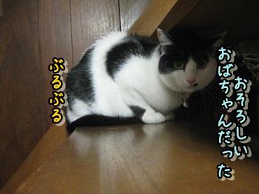 b0151748_124636.jpg
