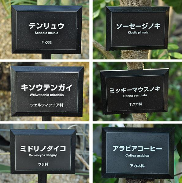 新宿御苑・大温室_a0003650_21492752.jpg