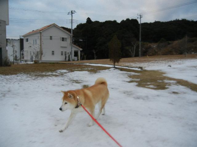 '13,1,16(水)名残雪と水彩画教室!_f0060461_2016827.jpg