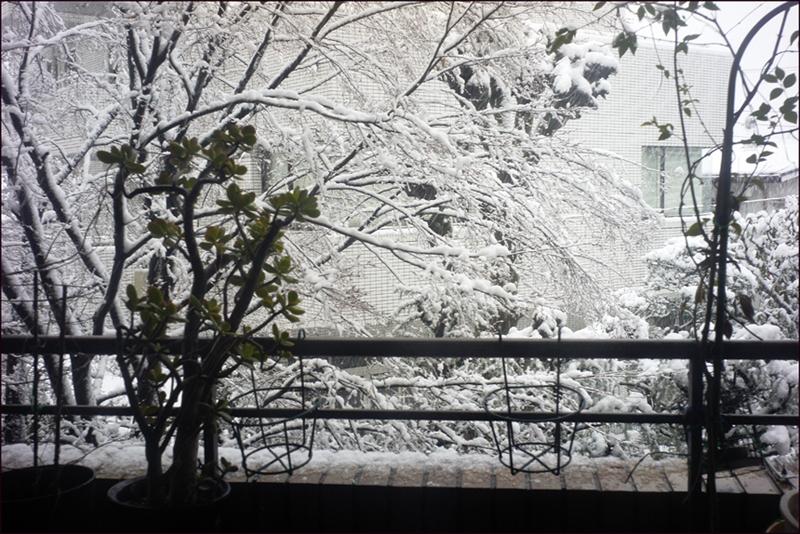 雪降る東京で古の巴里を白黒にして、、、_a0031363_1572553.jpg