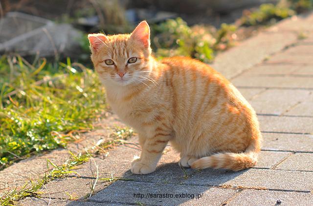 のら猫_e0028416_0141440.jpg