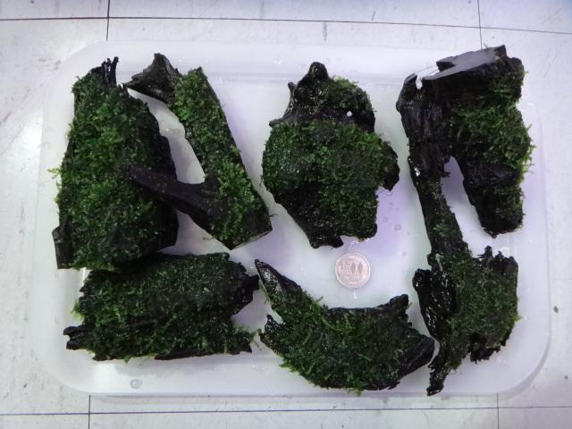 130117 熱帯魚・水草_f0189122_1335574.jpg