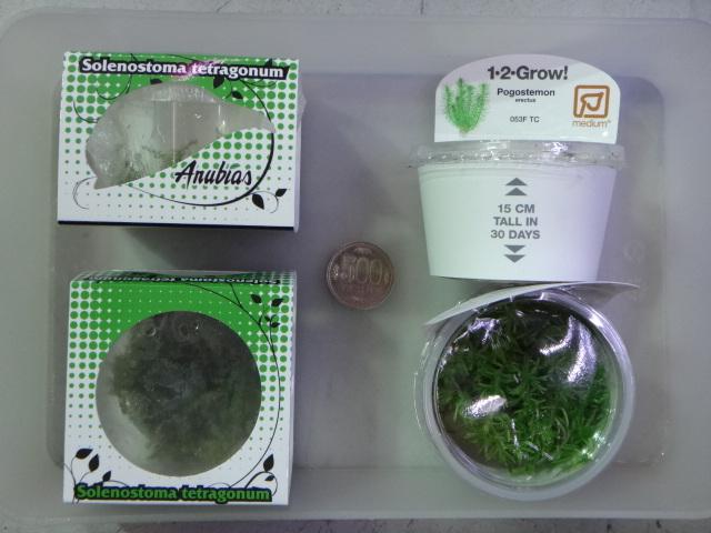 130117 熱帯魚・水草_f0189122_1343979.jpg