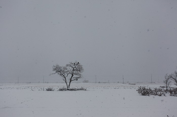 雪_a0294534_18515274.jpg