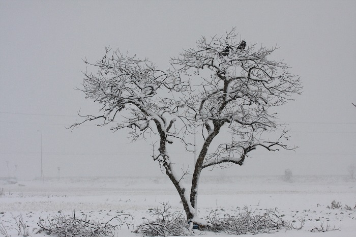 雪_a0294534_18523455.jpg