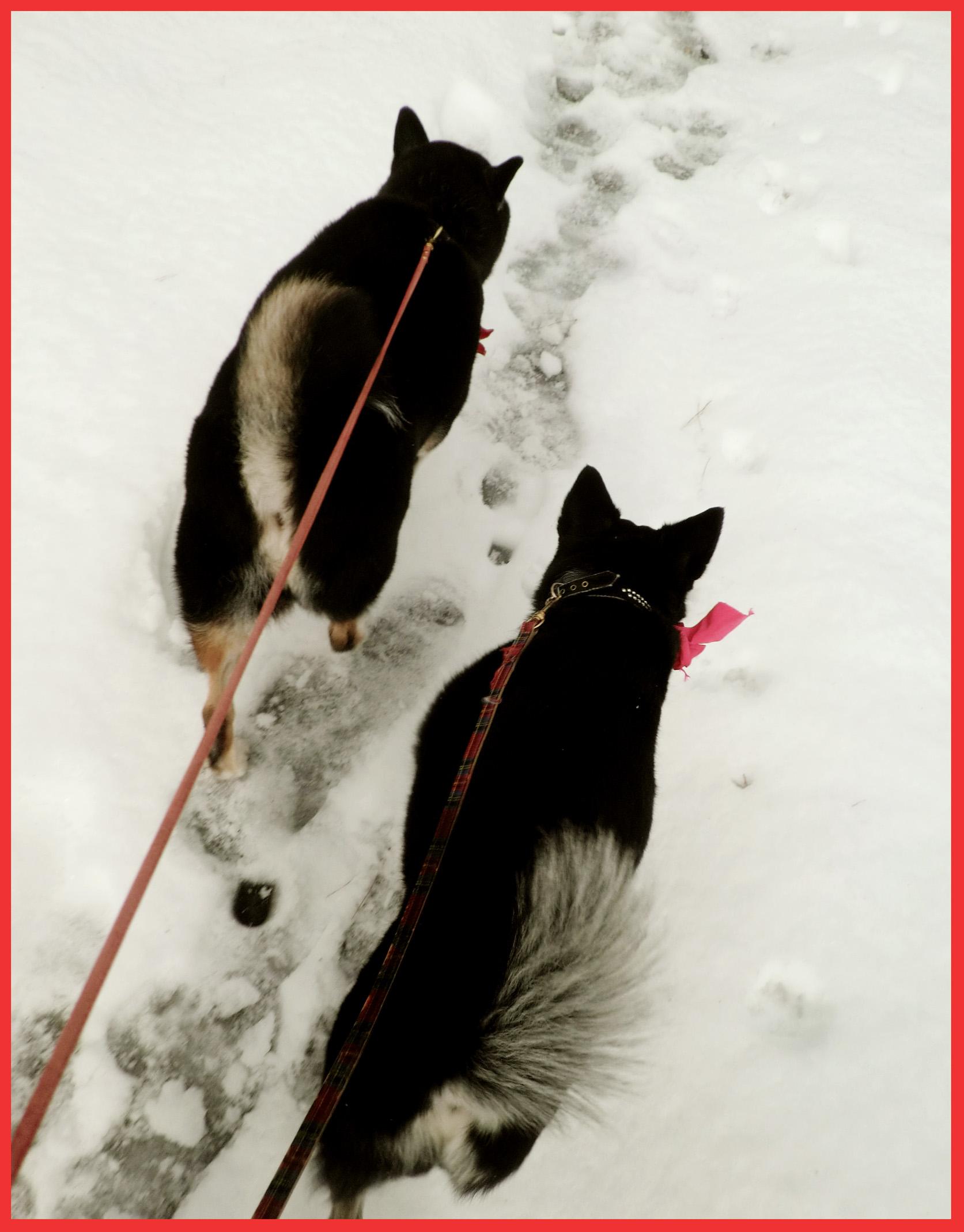 雪、歓喜の歌。_e0236072_112371.jpg
