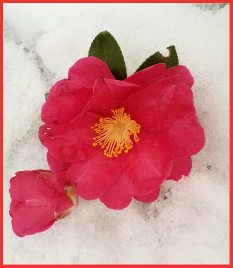 雪、歓喜の歌。_e0236072_1143261.jpg