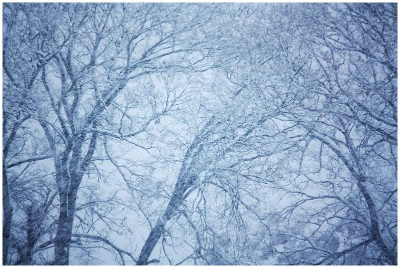 雪が呼んでいる_d0151003_0141145.jpg