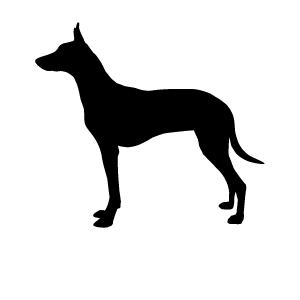 アフリカの犬_d0290407_22185969.png
