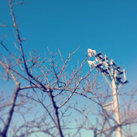 春を待つ蕾_e0131432_9575625.jpg