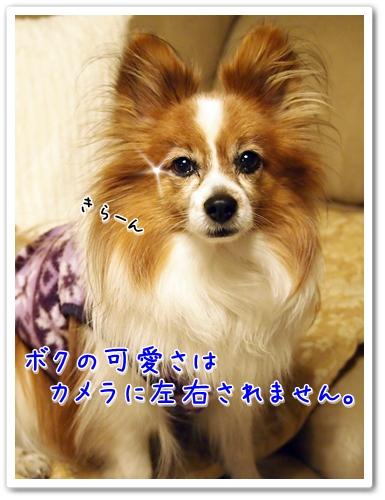 d0013149_0145252.jpg