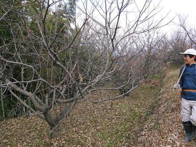 栗の木剪定の研修会に参加しました_a0254656_15343778.jpg