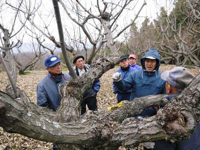 栗の木剪定の研修会に参加しました_a0254656_1534869.jpg