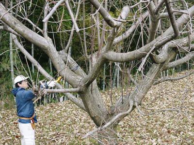栗の木剪定の研修会に参加しました_a0254656_15421883.jpg