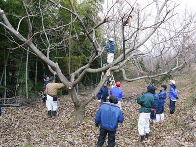 栗の木剪定の研修会に参加しました_a0254656_1601021.jpg